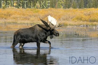 https://imgc.allpostersimages.com/img/posters/priest-lake-idaho-bull-moose_u-L-Q1GQOME0.jpg?p=0