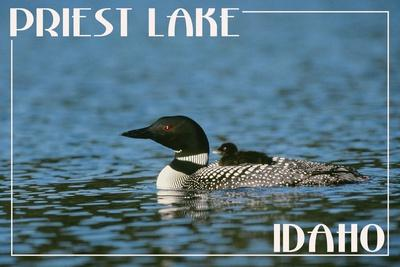 https://imgc.allpostersimages.com/img/posters/priest-lake-idaho-loon-and-chick_u-L-Q1GQOMS0.jpg?p=0