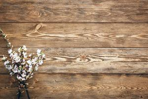 Flowers on Wood Texture Background by primopiano