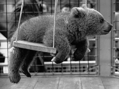 Princess Anne's Bear on His Swing