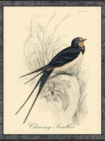 Printed Chimney Swallow