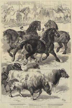 https://imgc.allpostersimages.com/img/posters/prize-animals-at-the-royal-agricultural-society-s-international-exhibition-at-kilburn_u-L-PUSKEA0.jpg?p=0