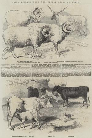 https://imgc.allpostersimages.com/img/posters/prize-animals-from-the-cattle-show-at-paris_u-L-PVWBHS0.jpg?p=0
