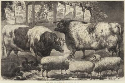 https://imgc.allpostersimages.com/img/posters/prize-cattle-pigs-and-sheep-at-the-smithfield-club-show_u-L-PUSMUV0.jpg?p=0