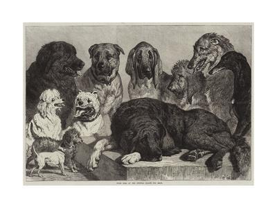https://imgc.allpostersimages.com/img/posters/prize-dogs-at-the-crystal-palace-dog-show_u-L-PUSON60.jpg?p=0