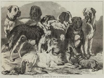 https://imgc.allpostersimages.com/img/posters/prize-dogs-in-the-national-dog-show-at-islington_u-L-PUSOKU0.jpg?p=0
