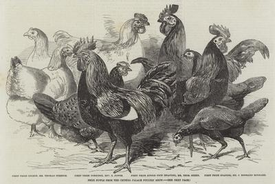 https://imgc.allpostersimages.com/img/posters/prize-fowls-from-the-crystal-palace-poultry-show_u-L-PVWHDV0.jpg?p=0