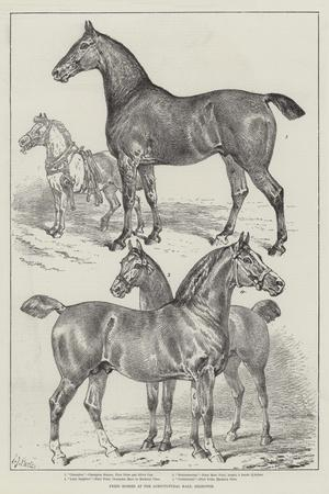 https://imgc.allpostersimages.com/img/posters/prize-horses-at-the-agricultural-hall-islington_u-L-PUSMVA0.jpg?p=0