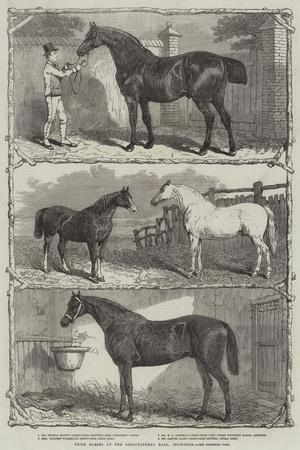 https://imgc.allpostersimages.com/img/posters/prize-horses-at-the-agricultural-hall-islington_u-L-PVWDTY0.jpg?p=0