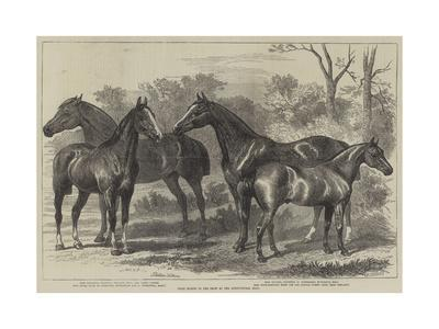 https://imgc.allpostersimages.com/img/posters/prize-horses-in-the-show-at-the-agricultural-hall_u-L-PUG6K60.jpg?p=0