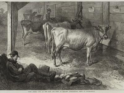 https://imgc.allpostersimages.com/img/posters/prize-jersey-cows-at-the-bath-and-west-of-england-agricultural-show-at-southampton_u-L-Q1HKT6E0.jpg?artPerspective=n