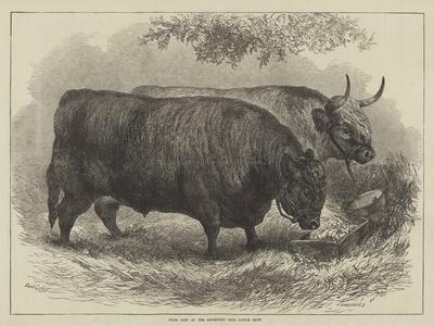 https://imgc.allpostersimages.com/img/posters/prize-oxen-at-the-smithfield-club-cattle-show_u-L-PUSOML0.jpg?p=0
