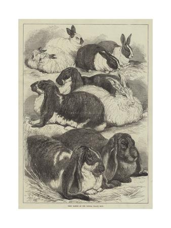 https://imgc.allpostersimages.com/img/posters/prize-rabbits-at-the-crystal-palace-show_u-L-PUSONR0.jpg?p=0