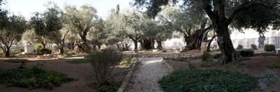 Probable Site of the Garden of Gethsemane, Mount of Olives, All Nations Church, Israel, Jerusalem