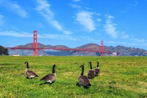Golden Gate Bridge with Gooses by prochasson