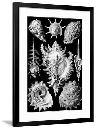 Prosobranchia Nature by Ernst Haeckel--Framed Art Print