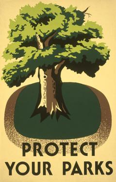 Protect Your Parks, Stately Tree