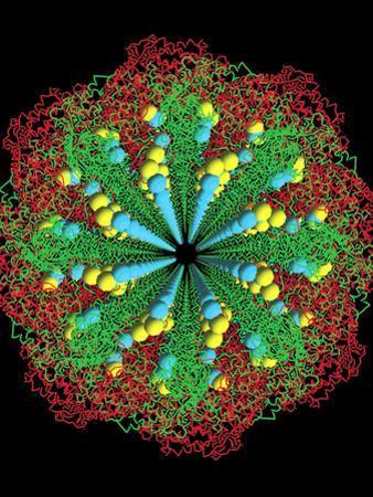 Protein Nanotube