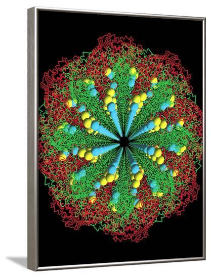 Protein Nanotube--Framed Photographic Print