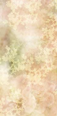 Sweet Mystery I by Prunis Dulcis
