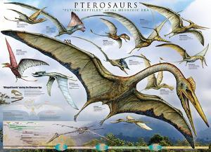 Pterosaurs - Flying Reptiles