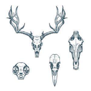 Animal Scull Set Deer Horse Cat Crow by Ptich-ya