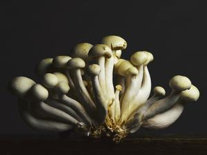 Mushrooms Clustered Together by Pulse