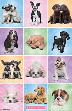 Puppies - Cuties