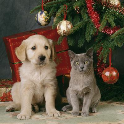 Puppy with Kitten under Christmas Tree