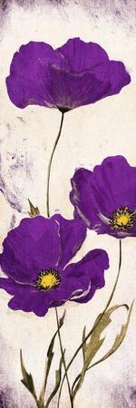 https://imgc.allpostersimages.com/img/posters/purple-look_u-L-Q1HR5GC0.jpg?artPerspective=n