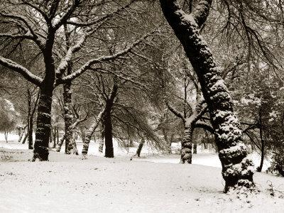 https://imgc.allpostersimages.com/img/posters/queens-park-manchester-in-the-winter_u-L-P5F5RD0.jpg?p=0