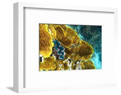 Queensland Ocean Corals--Framed Art Print