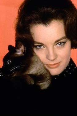 Quoi by neuf Pussycat WHAT'S NEW PUSSYCAT ?de CliveDonner with Romy Schneider, 1965 (photo)