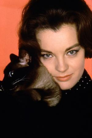 https://imgc.allpostersimages.com/img/posters/quoi-by-neuf-pussycat-what-s-new-pussycat-de-clivedonner-with-romy-schneider-1965-photo_u-L-Q1C221H0.jpg?artPerspective=n