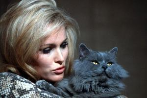 Quoi by neuf Pussycat WHAT'S NEW PUSSYCAT ?de CliveDonner with Ursula Andress, 1965 (photo)