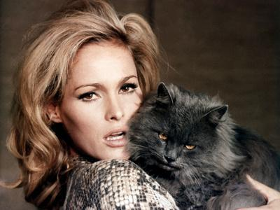 https://imgc.allpostersimages.com/img/posters/quoi-by-neuf-pussycat-what-s-new-pussycat-de-clivedonner-with-ursula-andress-1965-photo_u-L-Q1C337A0.jpg?artPerspective=n