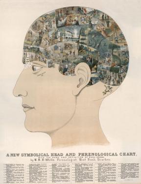 Phrenological Head by R.b.d. Wells