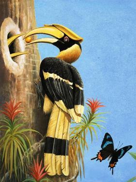 The Hornbill by R.B. Davis