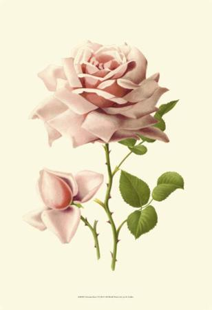 Victorian Rose I by R. Guillot