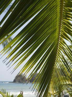 Palm Leaf, Nicoya Pennisula, Costa Rica, Central America by R H Productions
