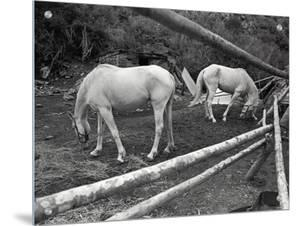 Two Horses by R.R.