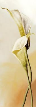 White Callas II by R. Thorpe