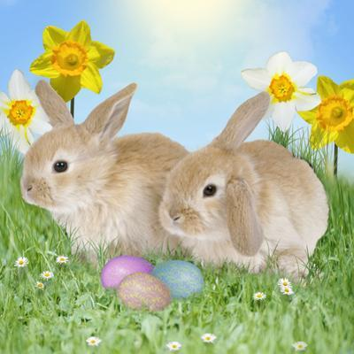 Rabbit with Easter Eggs and Daffodils