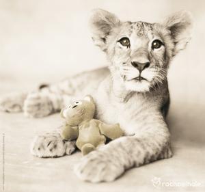 Arjuna and Teddy by Rachael Hale