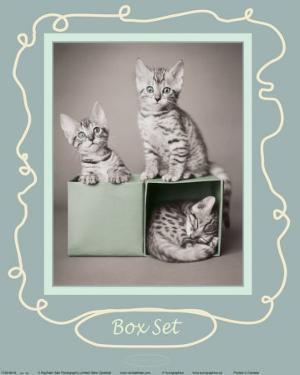 Box Set by Rachael Hale