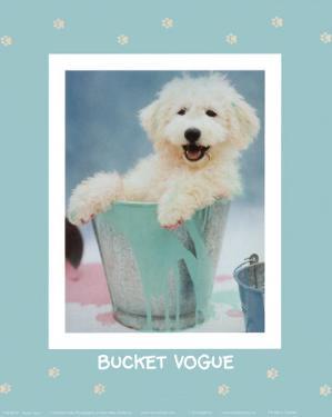 Bucket Vogue by Rachael Hale
