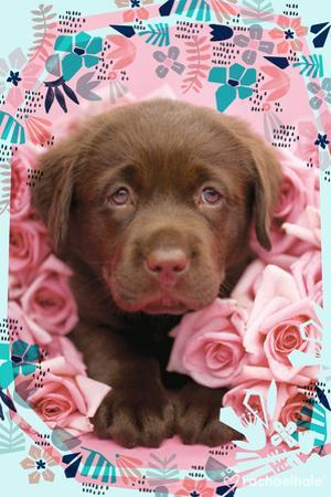 Floral Puppy by Rachael Hale