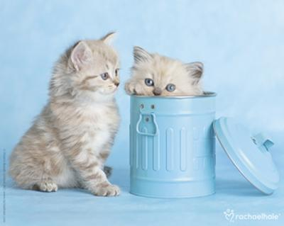 Mitzy & Lizzy by Rachael Hale