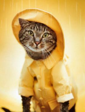 Rain Cat by Rachael Hale