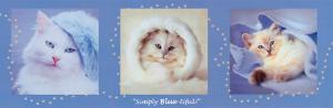 Simply Bluetiful by Rachael Hale
